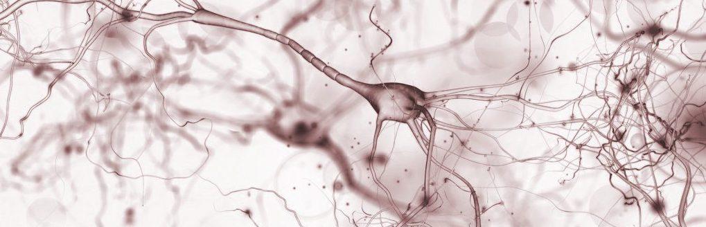 Computational Neurosciences